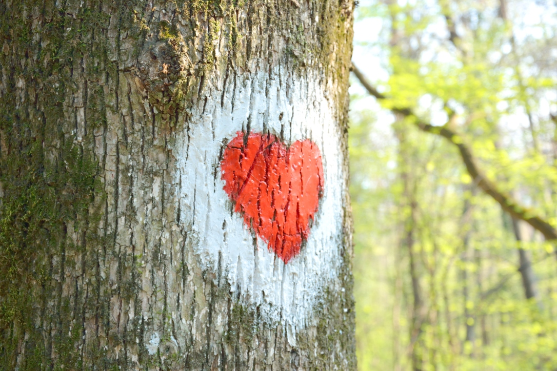 Red Heart on a Tree